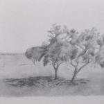 25cmx30cm , fusain et mine de plomb sur papier, 2004